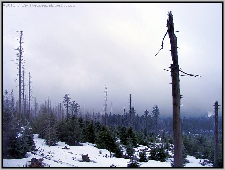 Wald am Brocken